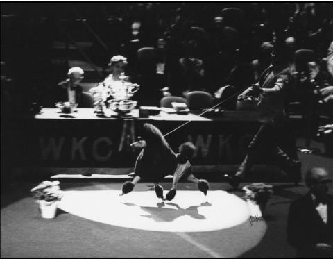 Rimskittle Ruffian i BIS-final på Westminster 1980