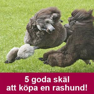 Nordisk Pudelkonferens
