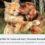 Nya föreskrifter för hund och katt – info från SKK