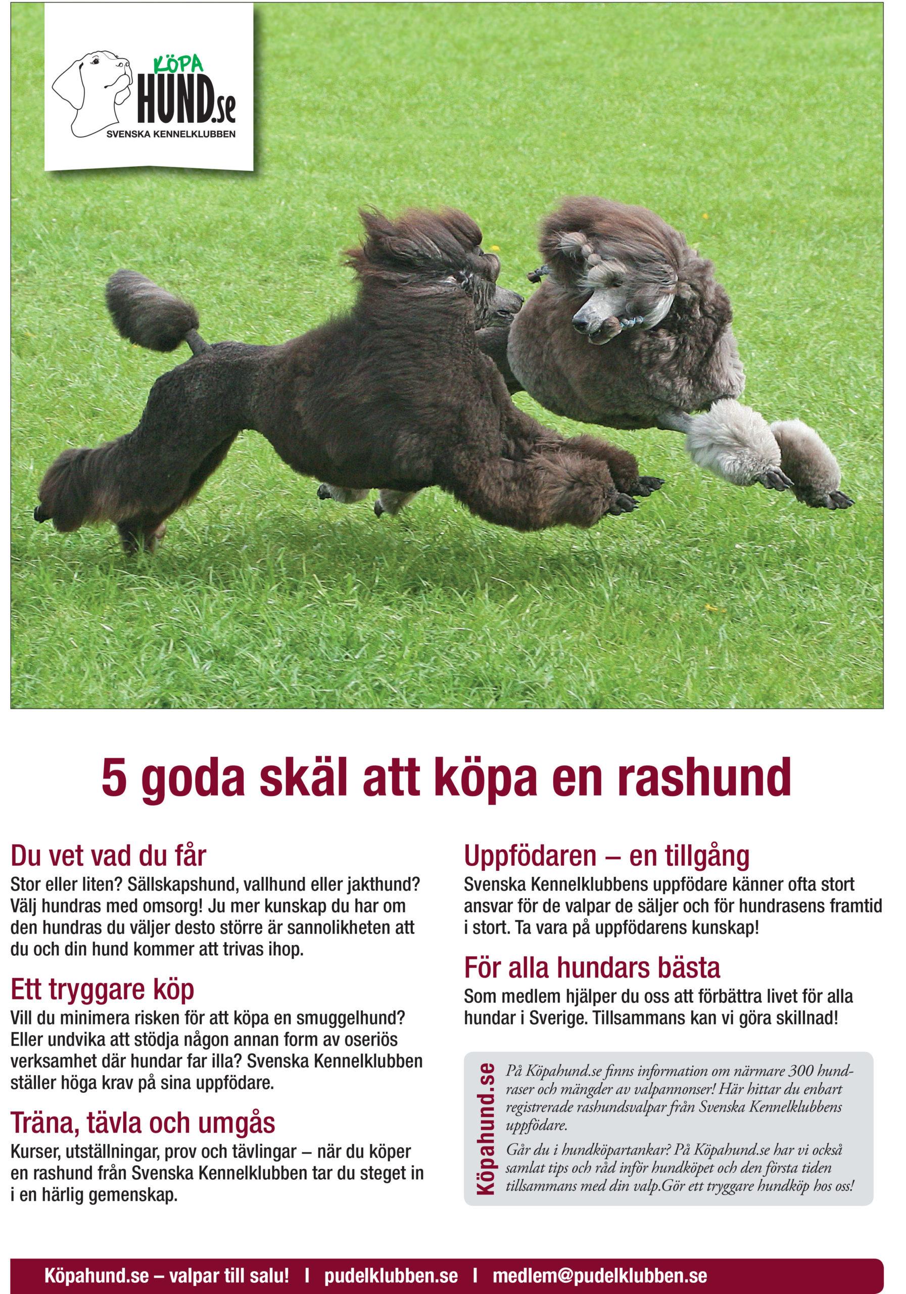 Fem goda skäl att köpa rashund