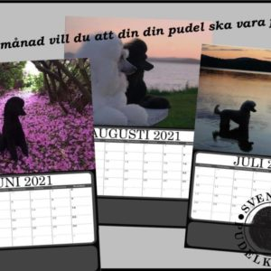 Kalender 2021 – med just din bild?